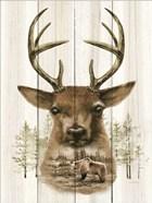 Deer Wilderness Portrait