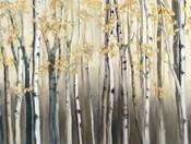 Golden Birch III