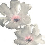 Gray Blush Cosmos I on White