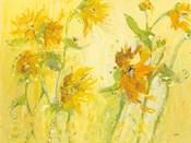 Your Sweet Orange Flowers