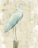 Coastal Egret I v2 no Aqua