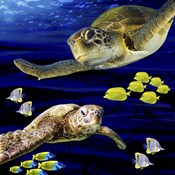 Sea Creatures Turtle