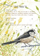 Long Tailed Tit Postcard