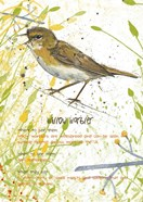 Willow Warbler Postcard