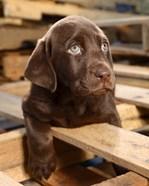 Bryce Puppy