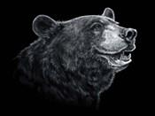Black White Black Bear