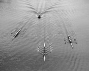 1950s Aerial View Of Rowing Competition