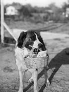 1930s Dog Holding Cat