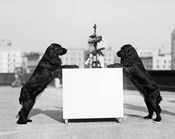 1930s Two Black Cocker Spaniels Standing