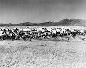 Movie Still Of The Starting Line Of Oklahoma Land Rush 1893