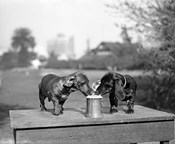 1890S Two Dachshund Puppies