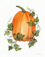 Pumpkin and Vines IV