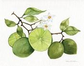 Citrus Garden VII