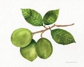 Citrus Garden II