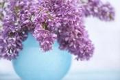 Lilacs in Blue Vase III