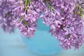 Lilacs in Blue Vase V