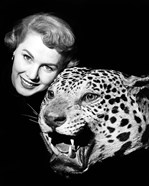 1950s Woman Face Posed With Growling Stuffed Leopard Head