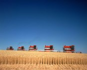 1970s Five Massey Ferguson Combines Harvesting Wheat Nebraska Usa