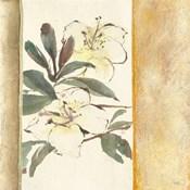 Ochre Rhododendron
