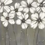 Monochrome Daisies