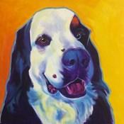 Bernese Mountain Dog - Zeke 2