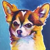 Chihuahua - Honey