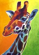 Giraffe - Summer Fling