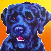 Portuguese Water Dog - Banks