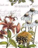 Botanical Postcard Color II
