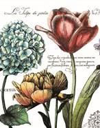 Botanical Postcard Color IV