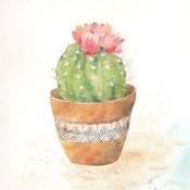 Cactus Pots IV