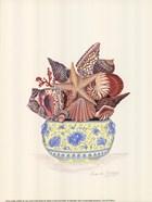 Seashell Collection III