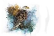 Expressions Bald Eagle