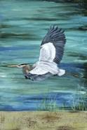 Great Blue - Heron - 3
