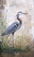 In The Reeds - Blue Heron - A