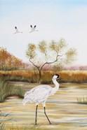Whooping Cranes - B