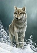Wolf On The Ridge