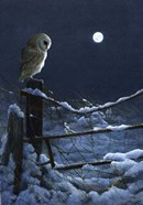 Silent Night Barn Owl
