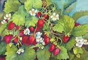 Strawberry Patch - A. Ripe on the Vine