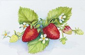 Strawberry Patch - F. Berry Border