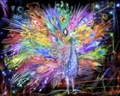 Peacock Nexsus