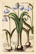 Matthaeus Merian Narcissus-Early16s