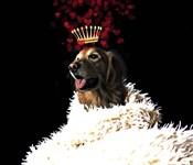 Royal Love Pup - Golden Retriever
