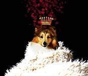 Royal Love Pup - Sheltie