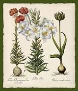 Botanica Nostalgia III
