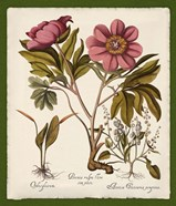 Botanica Nostalgia IV