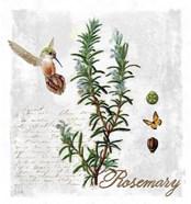 Botanical Garden Rosemary Herb