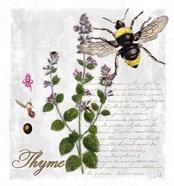 Botanical Garden Thyme Herb