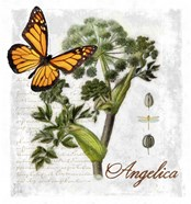 Botanical Gardern Angelica Herb