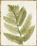 Forest Ferns I Antique